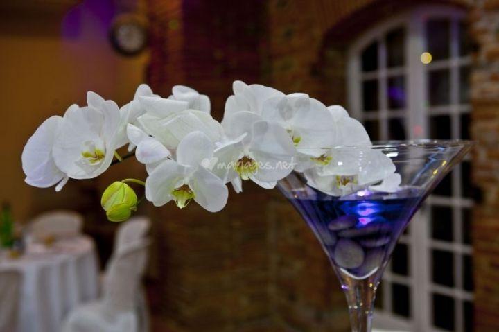 Magnifique orchidée