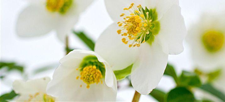 Birgit Falk - Das Blumenhaus