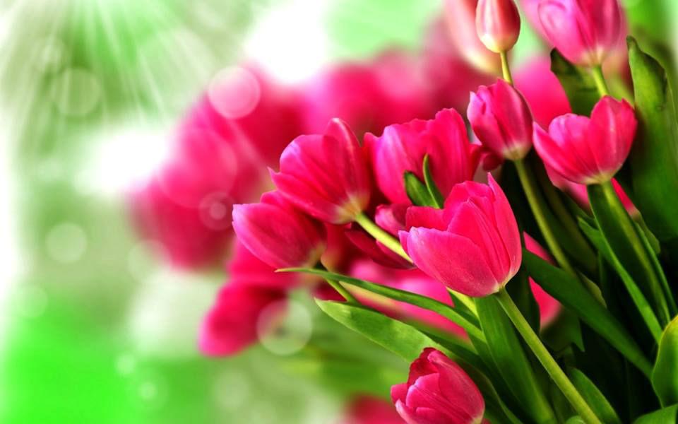Florería Expresiones y Detalles
