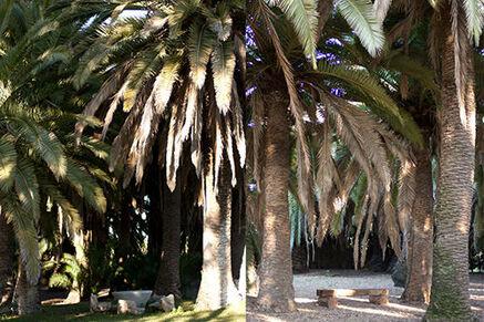 Rincones entre palmeras
