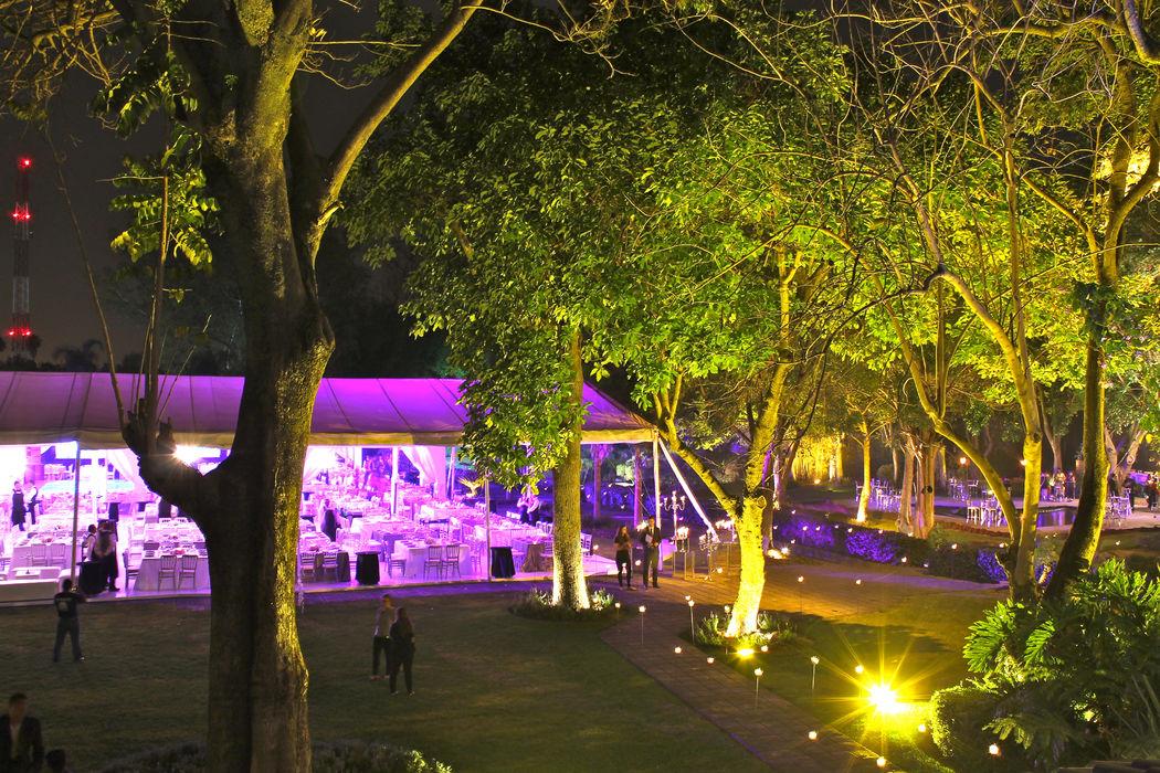 iluminación en nuestros enormes árboles