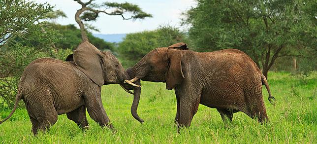 Beispiel: Safaris, Foto: Evaneos