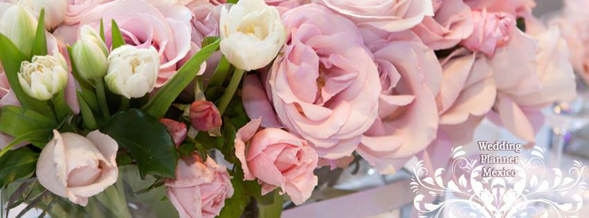 Lily D´Lucio Weddings & Events