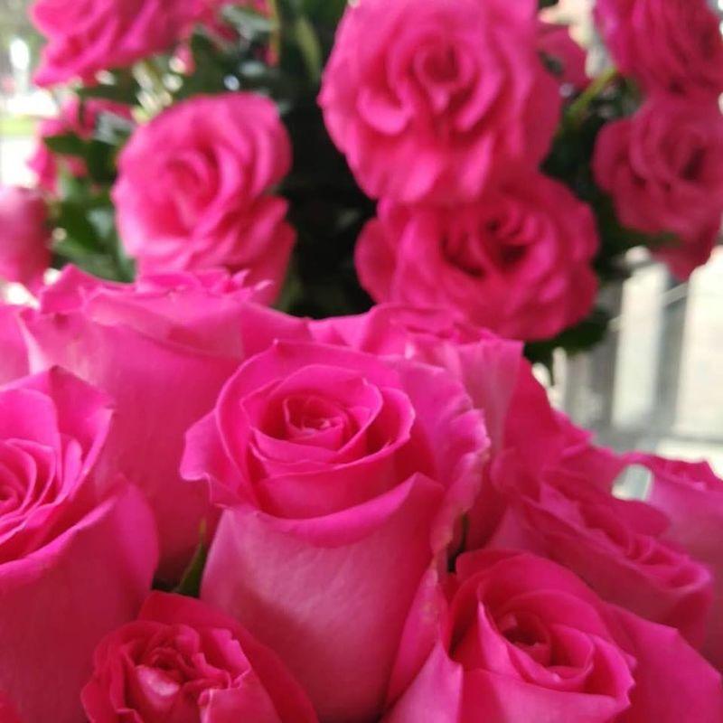 Rosas en Casa