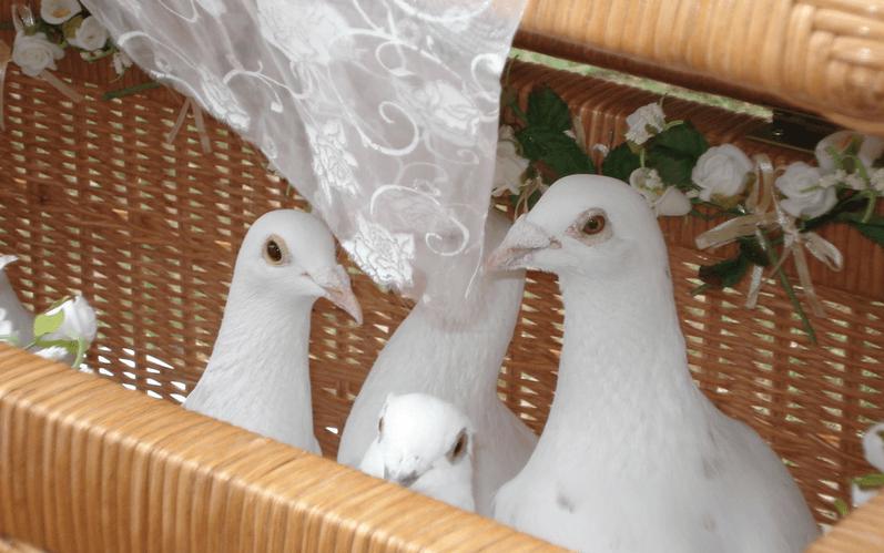 Beispiel: Hochzeitstauben, Foto: Hochzeitstauben Paradies.
