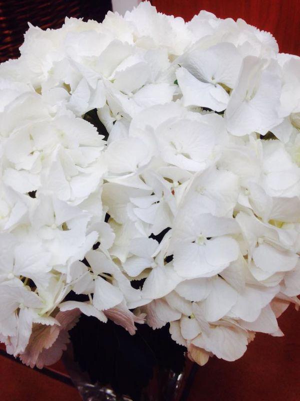 Flores Suviflor - Adela Villanueva