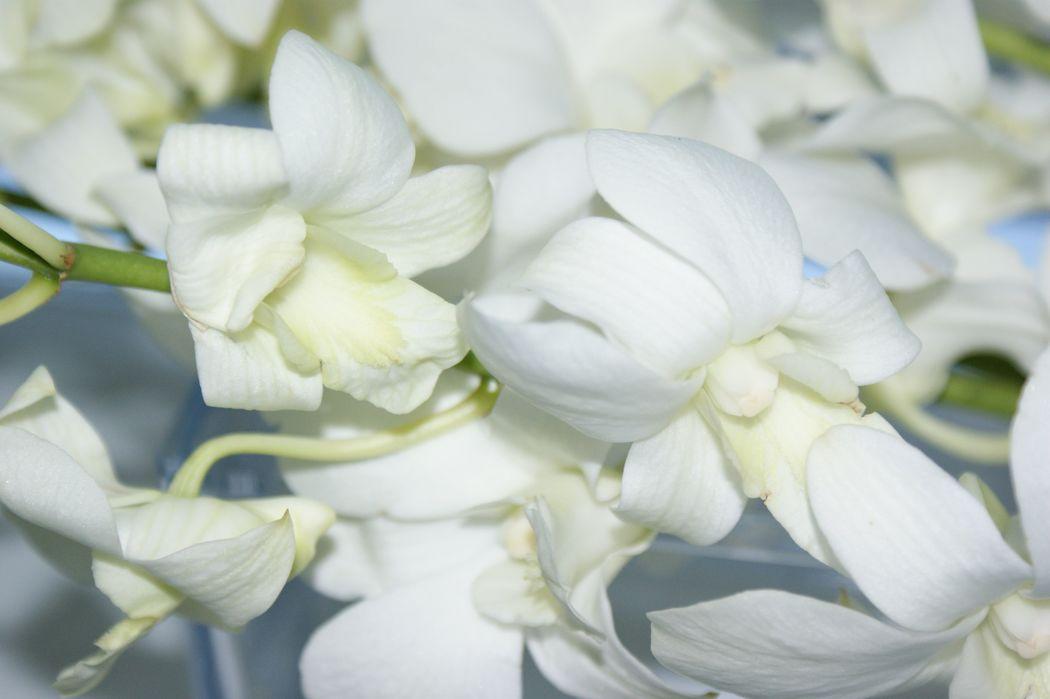 #Nature Lodge #Dekoration Bankett #Tischdekoration #Dekoration Orchideen #Dekoration Dendrobium #Dekoration weiss