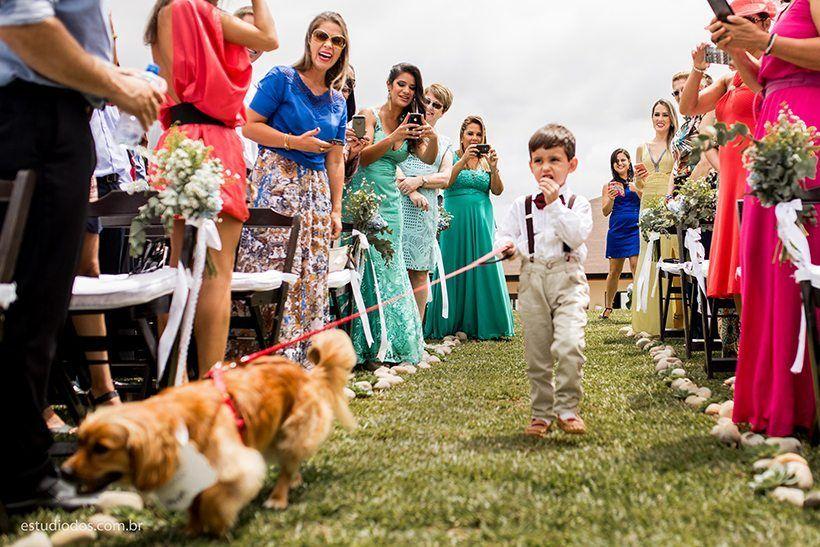 El paje y el perro entrando con los anillos