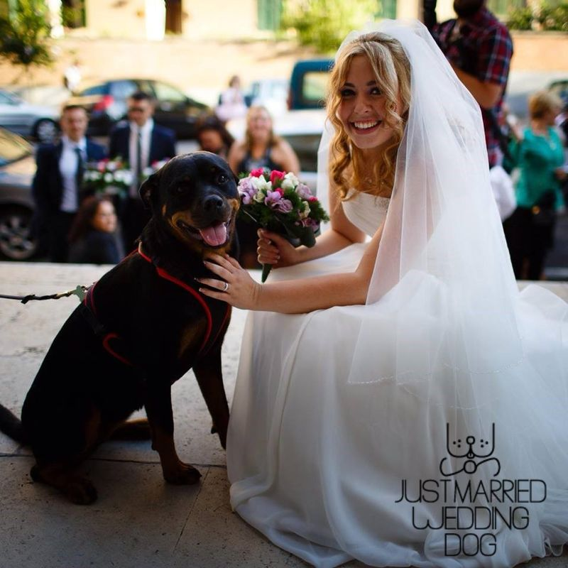 Just Married Wedding Dog