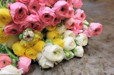Bourguignon Floristas