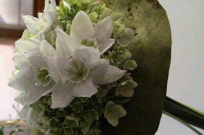 Blumen Hahn