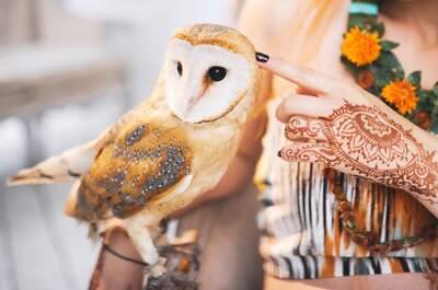 Аренда животных Exotic models