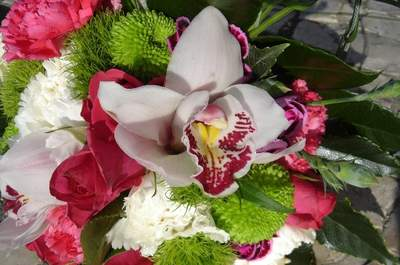 In Planta - Flores, Plantas e Interiores