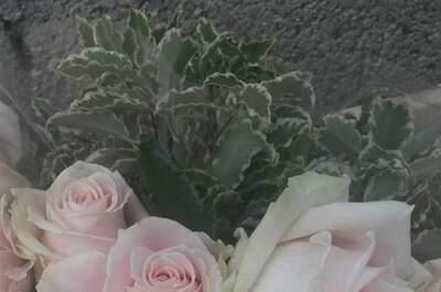 Rose Rosa di Ramona