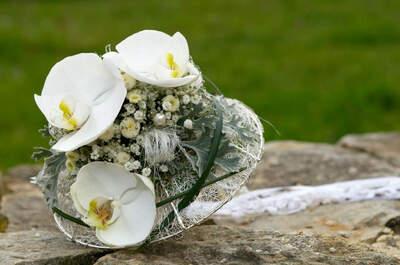 Achillea Dein Blumenladen