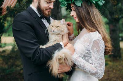 Свадебный фотограф Дмитрий Павлов