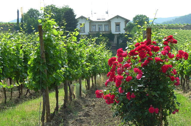 Villa im Paradies