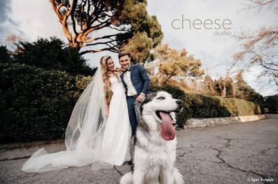 Cheese Studio Hochzeitsvideo