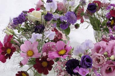 Quadriga Flora